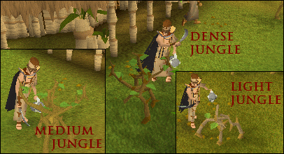 Types of jungle