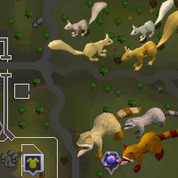 Squirrel and Raccoon East Varrock