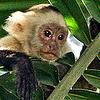 Tzara's Photo